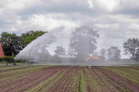 Akkerbouwer Adriaan Sandee doet een laatste poging om de suikerbieten net over de Duitse grens bij Groningen te redden door te beregenen. Als de bieten volgende week niet goed genoeg staan, gaat hij mais zaaien op het perceel. - Foto: Koos van der Spek