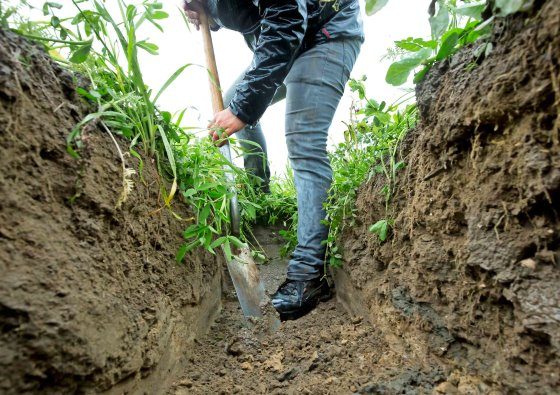 Een demonstratie groenbemesters bij een biologisch bedrijf. Een special fonds voor de bodem biedt perspectief voor een betere bodemkwaliteit, aldus deskundigen bij LTO. - Foto: Ruud Ploeg