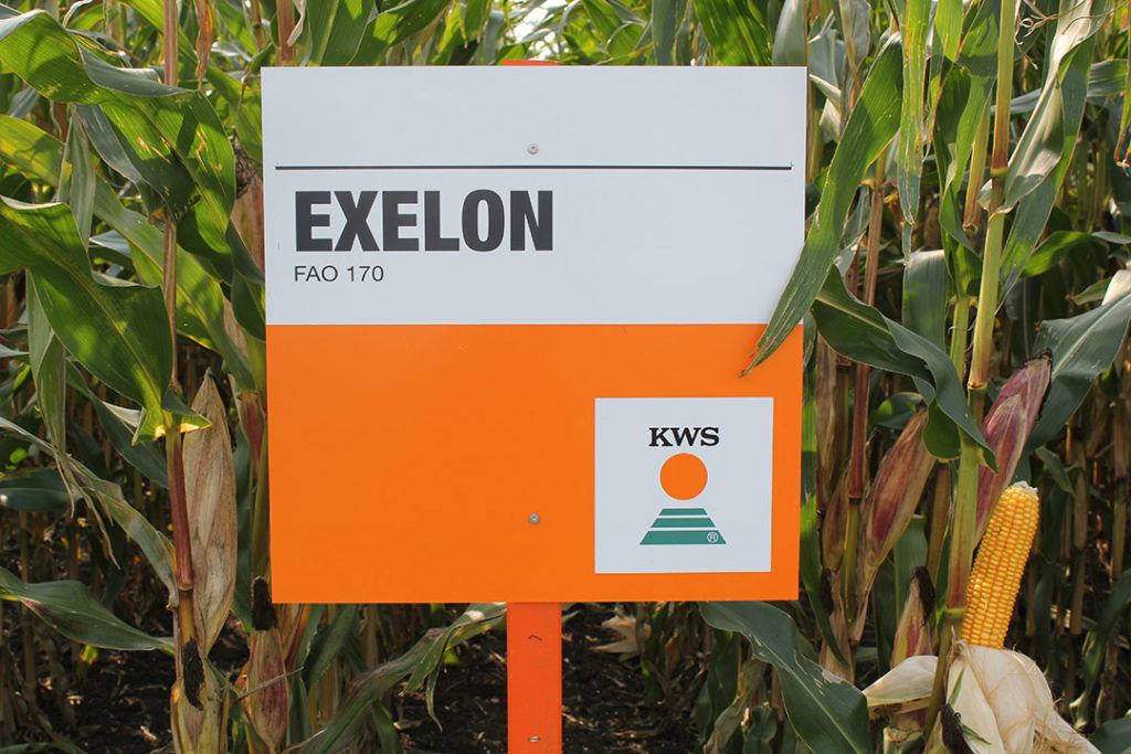 Het allervroegste ras op alle rassenlijsten in de Benelux is EXELON. - Foto: KWS