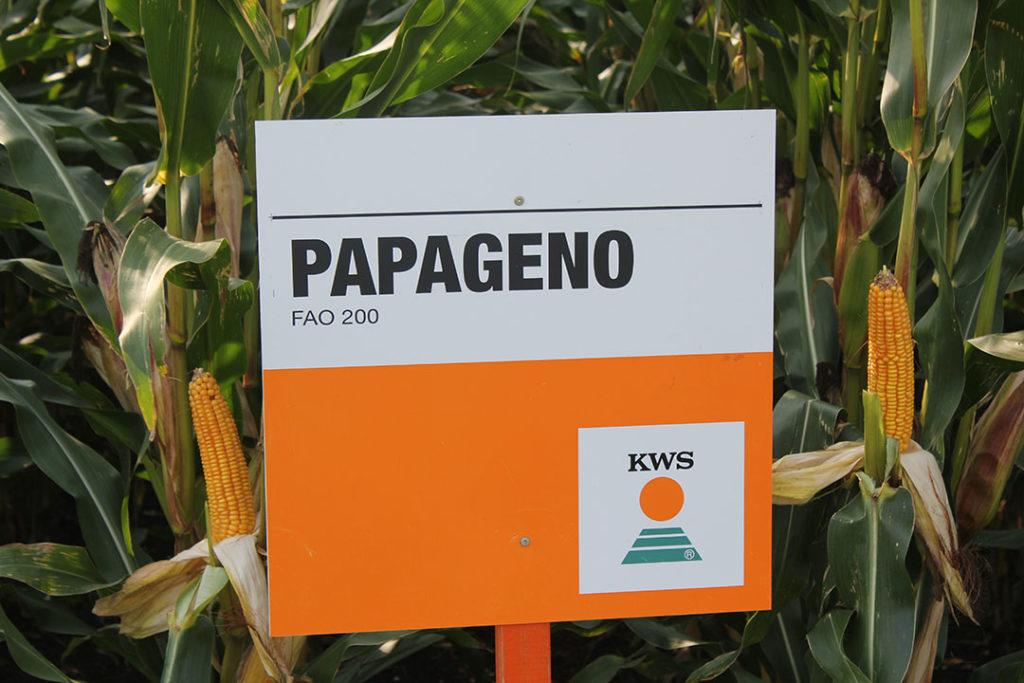 PAPAGENO geeft samen met Snelle Lente Rogge de hoogste drogestof-, eiwit- en zetmeelopbrengst per hectare. - Foto: KWS