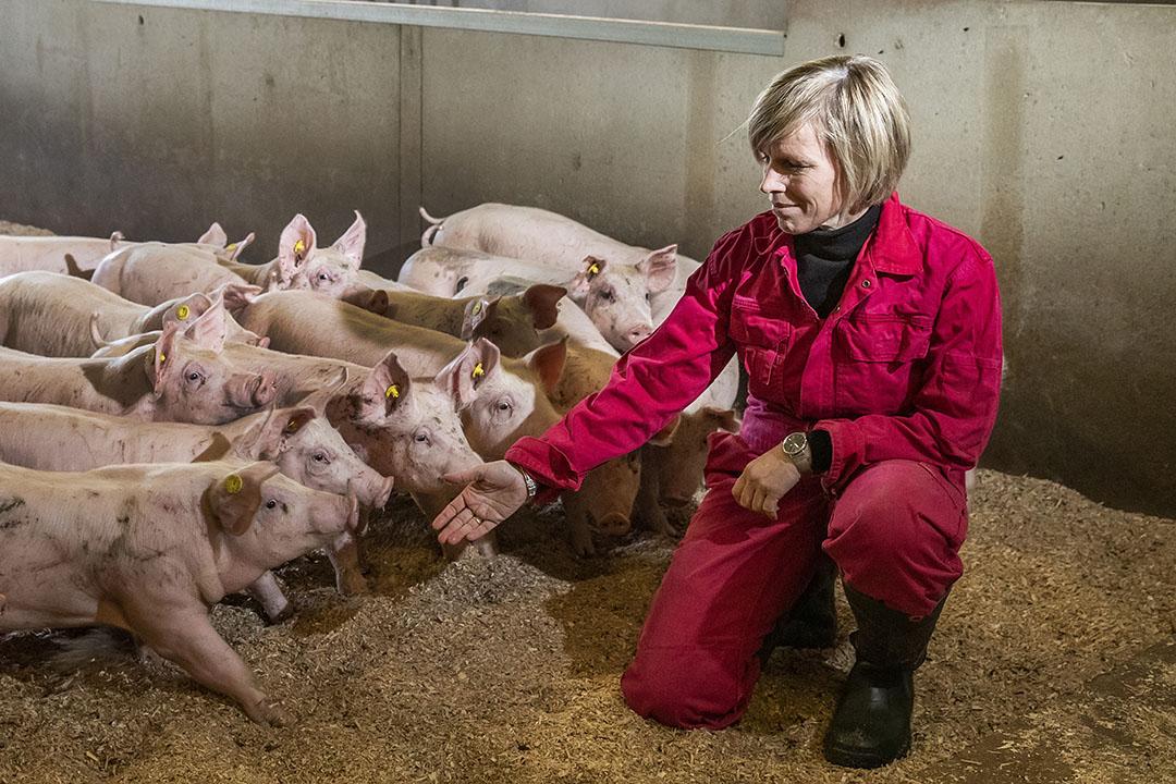 Gélinda Kok (45) is getrouwd met Gert Kok (52). Hij heeft een varkensbedrijf met 2.000 vleesvarkens: 500 gangbare en 1.500  volgens het wroetvarkenconcept