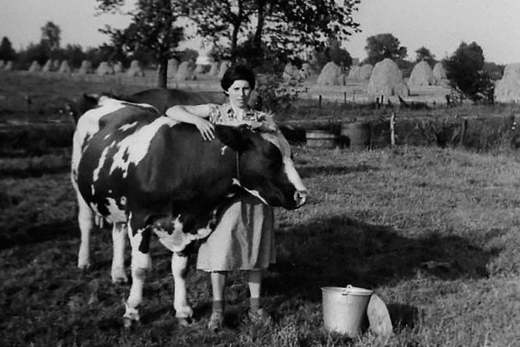 Netje in de wei bij een koe. Jan leerde haar kennen toen hij als knecht bij een boer in Waalre werkte. Met Netje bouwde hij aan een droom: een mooie ontginningsboerderij. - Foto's: Familie Madou