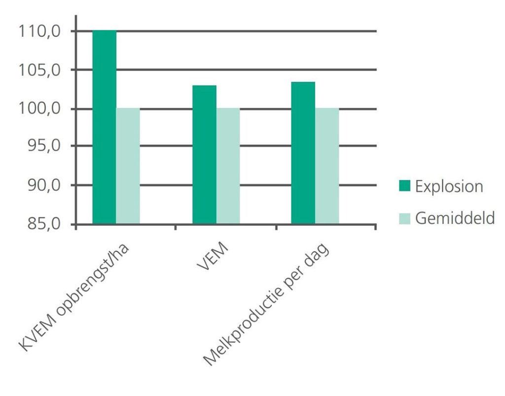 Het tetraploïde Engels raaigras ras Explosion scoort 112 voor 'drogestofopbrengst 1e snede' op de Nederlandse rassenlijst. - Bron: DSV Zaden