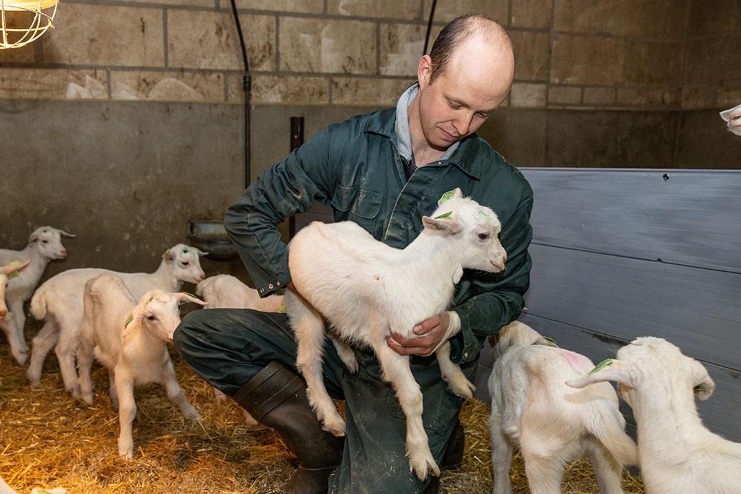 Oude varkensschuren doen dienst als lammerenstal maar eigenlijk voldoen ze niet meer. Er zit een nieuwe stal in de pijplijn.