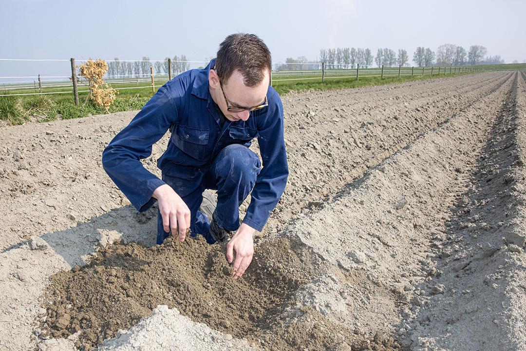 Het bouwplan omvat aardappelen, uien, suikerbieten, tarwe, wortelen, plant- en zaaiuien, bruine bonen, graszaad en maïs voor een veehouder in de buurt.