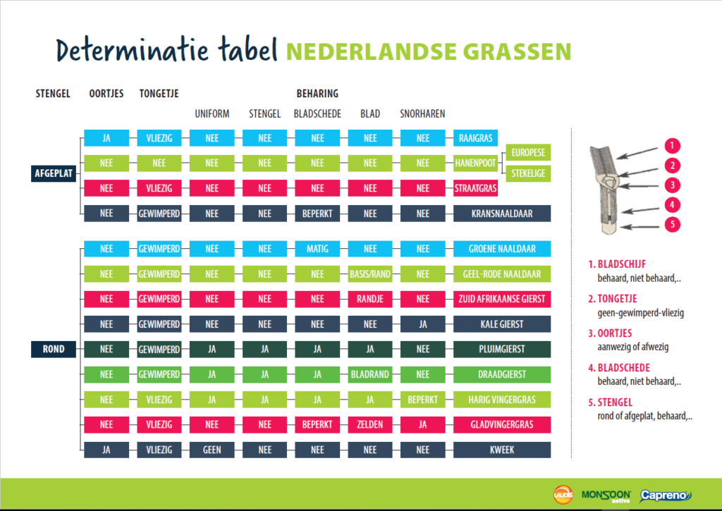 Determinatietabel Nederlandse grassen