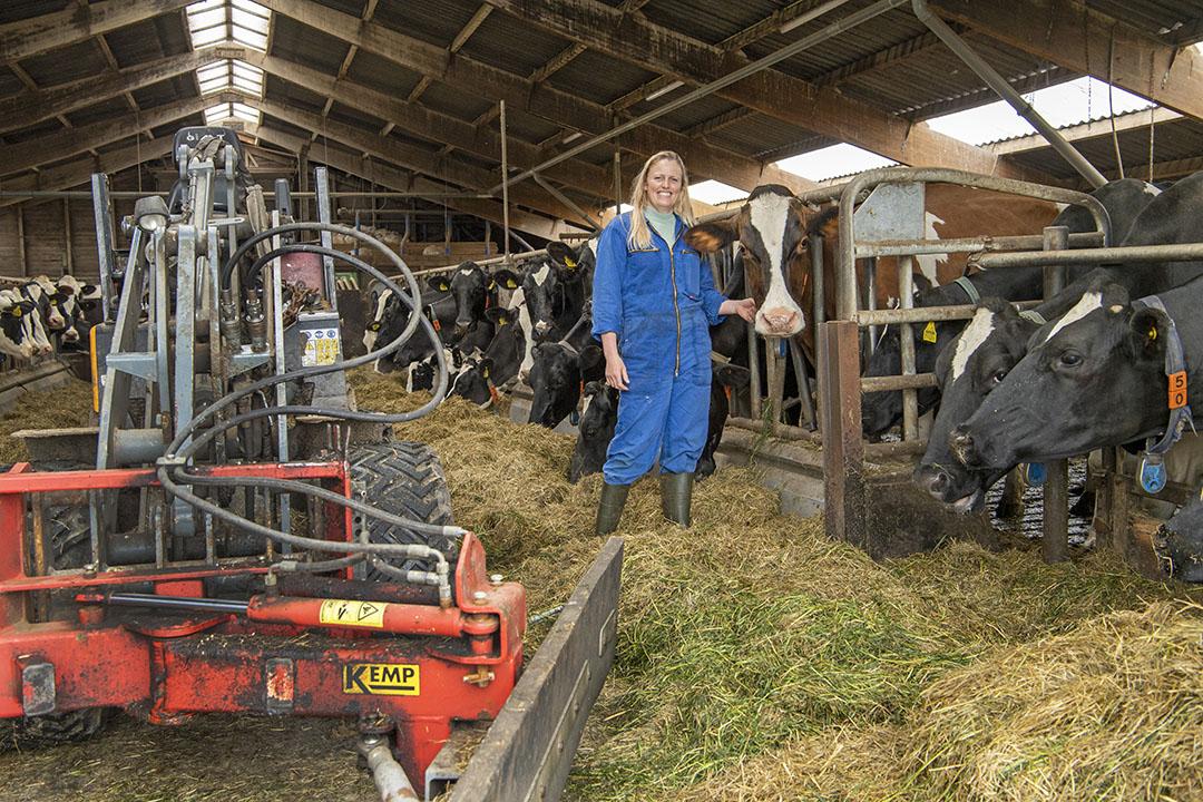 Rijen met mooie koeien aan het voerhek. Daar geniet Saskia enorm van.