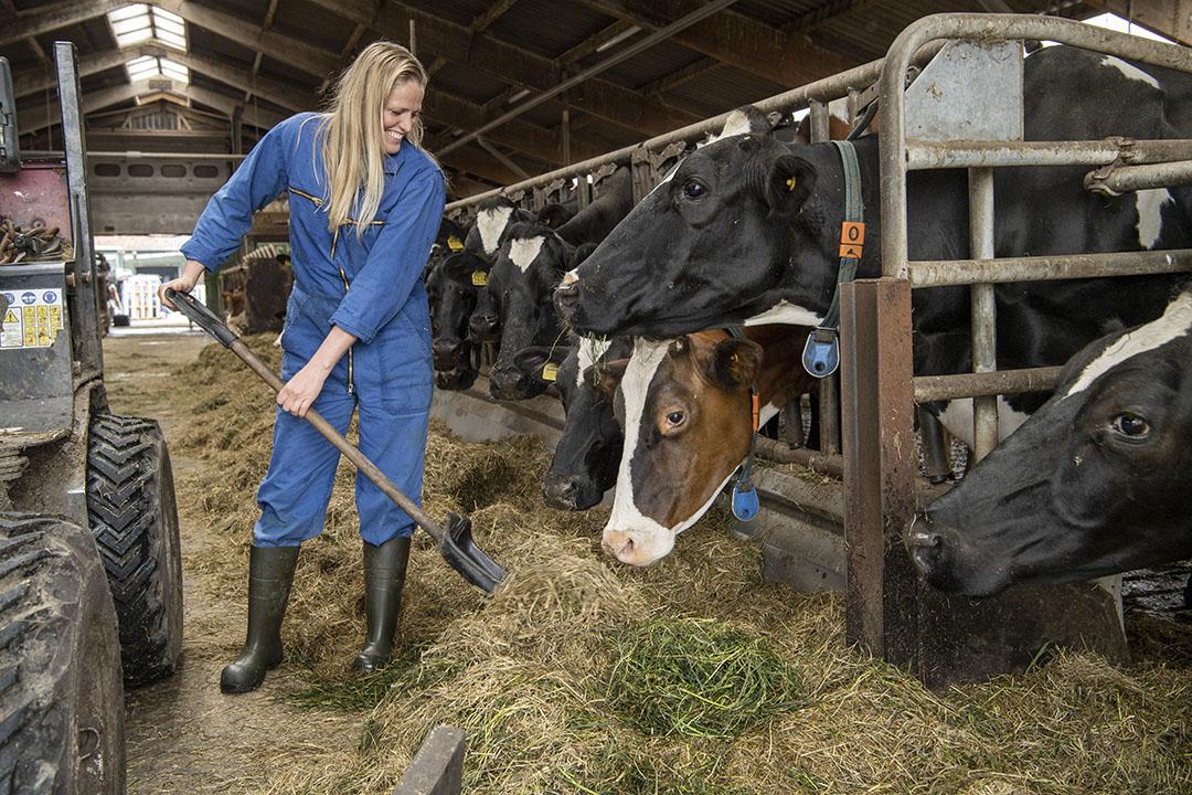 Dit jaar stonden de dieren langer op stal dan anders, buiten in de wei was het door overvloedige regen te nat.