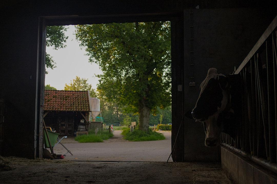 Een doorkijkje op het erf in Lonneker. Jorrit woont in Turijn, maar als hij in Nederland is, steekt hij hier de handen uit de mouwen.
