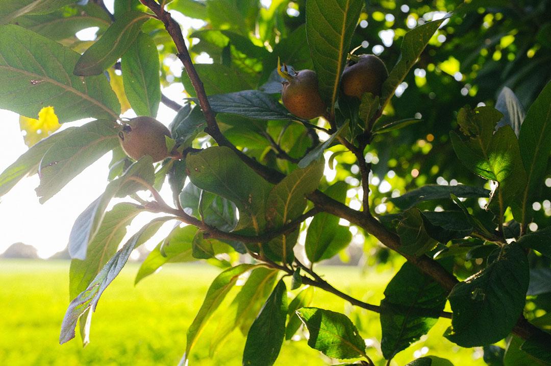 Een kijkje in de voedselsingel met onder andere walnoten.