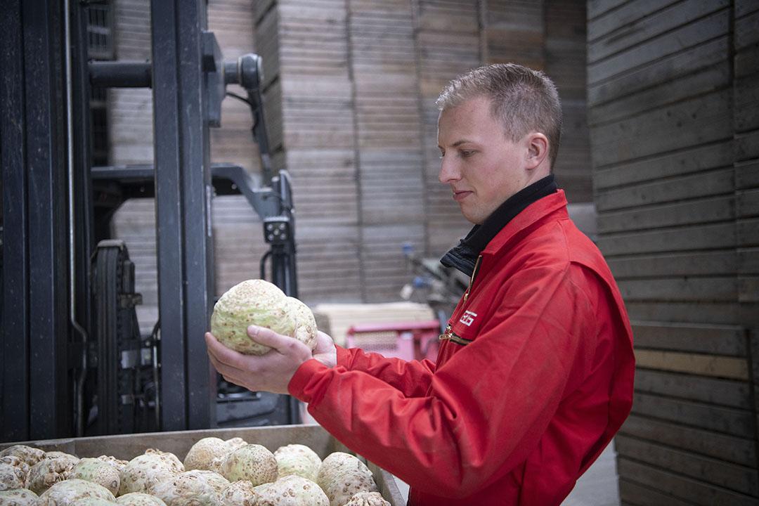 Mark heeft 30 hectare knolselderij, zijn vader 45 hectare pootaardappelen. Daarnaast is er een spoel- en verpakkingslijn voor de knolselderij.
