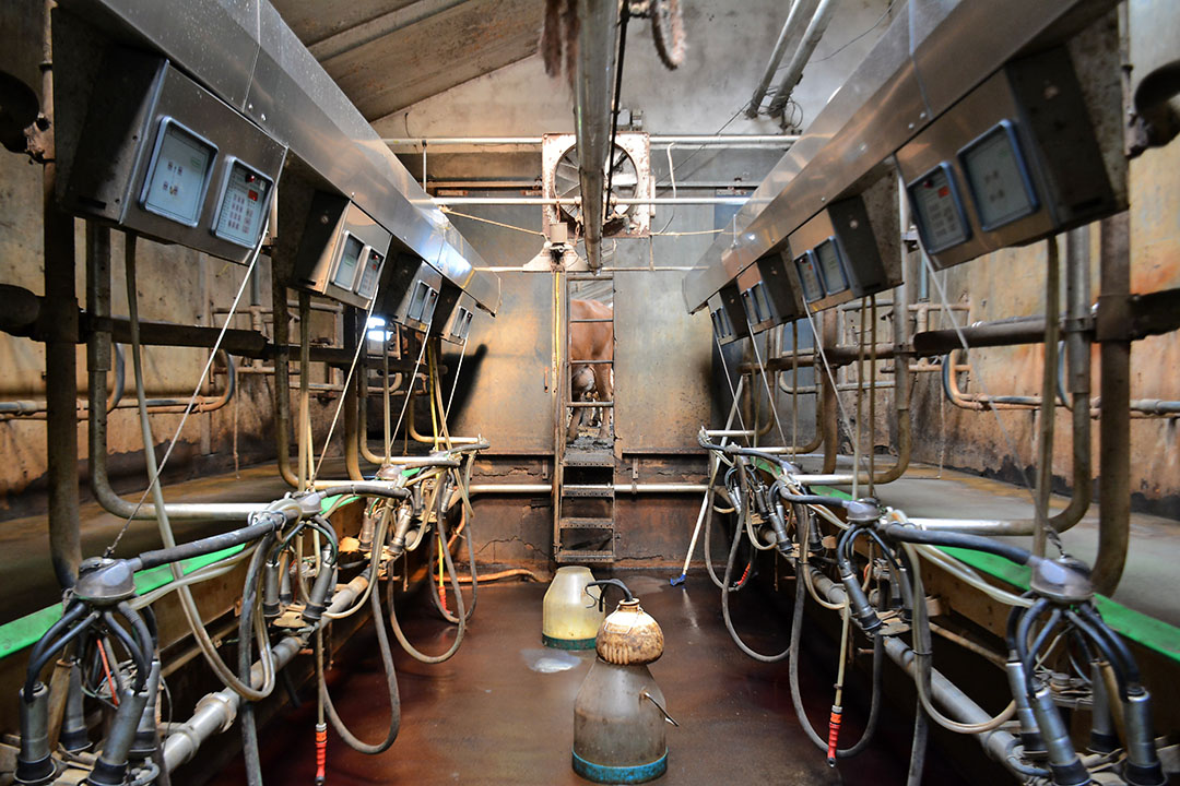 De melkstal is enigszins aan de krappe kant. Het melken wordt gedaan in een 2x6-visgraat van Westfalia uit 2000. - Foto: Jasper Penning