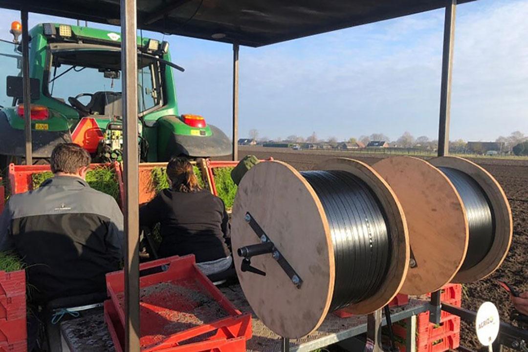 De aanleg van druppelslangen bij akkerbouwer Mischa Raedts in Sevenum (L.) , eind maart.