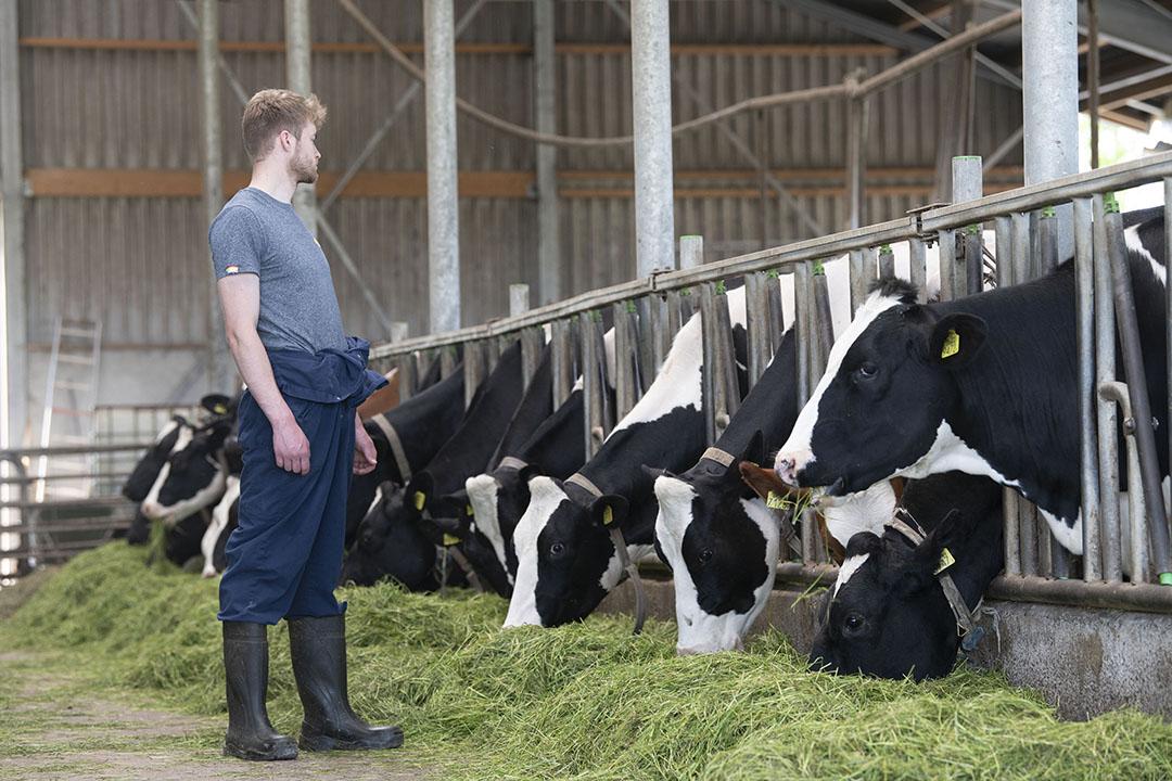 Het bedrijf telt 80 melkkoeien.