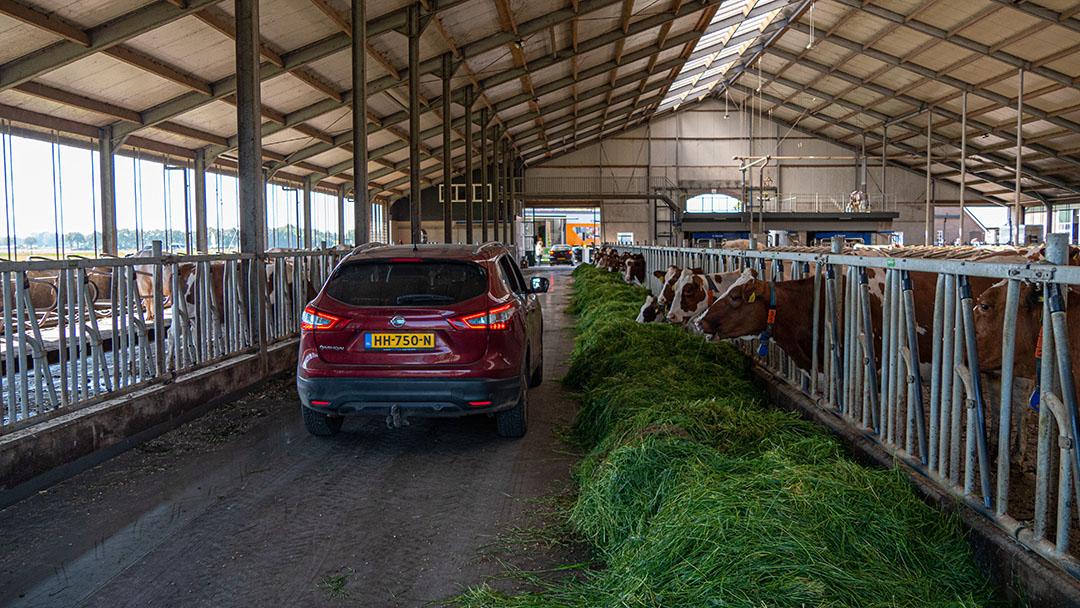 Op het bedrijf van familie Kloosterboer in Deventer kunnen de auto's zelfs over de voergang rijden om zo ook een kijkje in de stal te nemen.