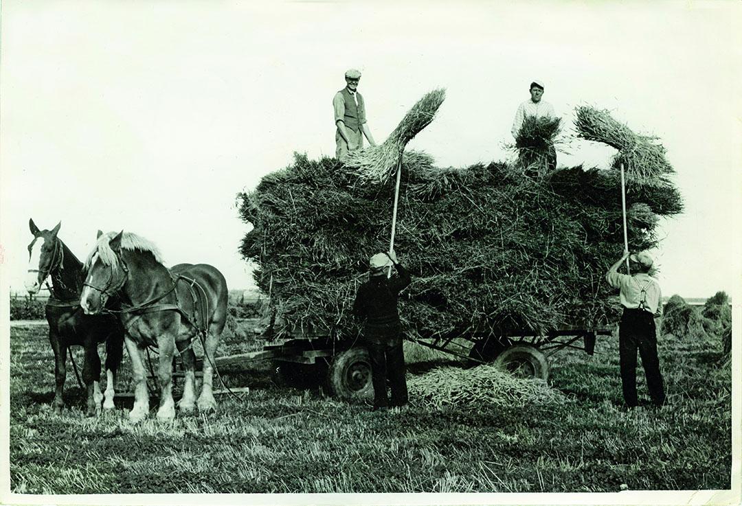 In de jaren vijftig van de vorige eeuw werkte een mannelijke kracht 2.900 standaarduren per jaar, op de zandgronden bleef het steken op 2.200 uren.