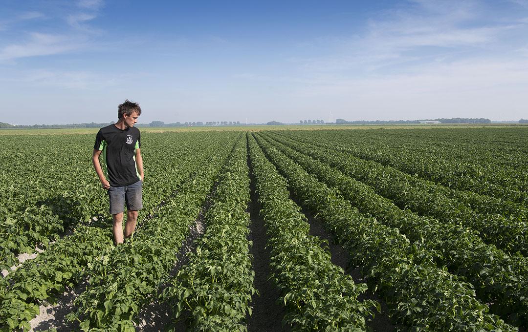 Het bouwplan omvat onder andere 70 hectare pootaardappelen.