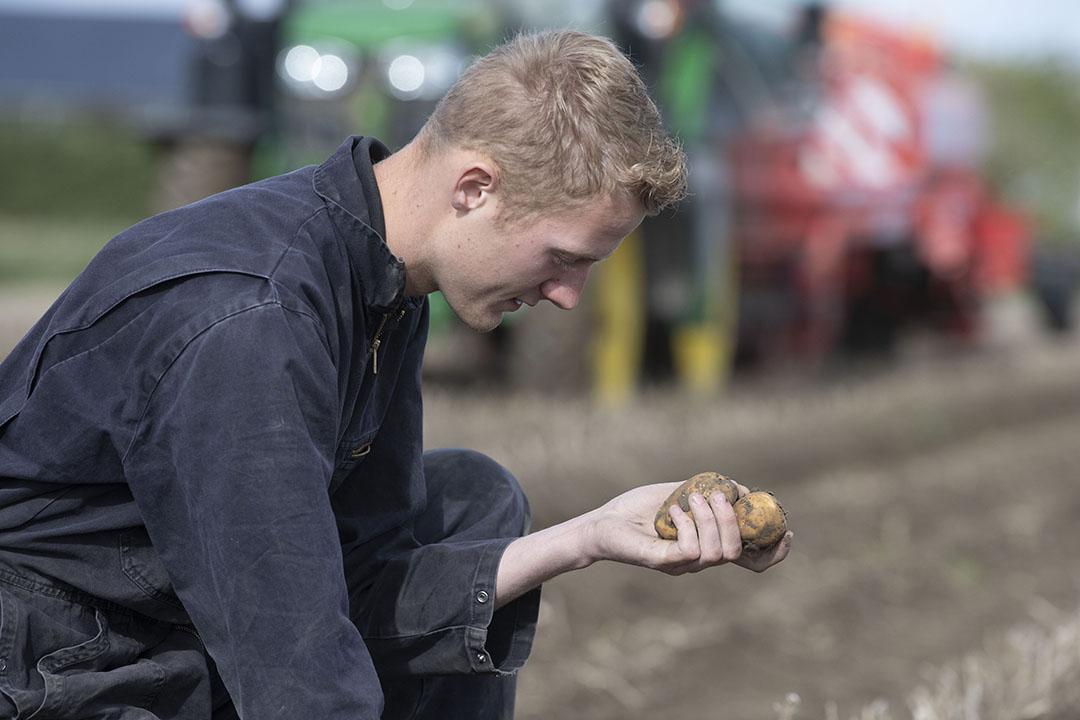 Het is de tijd van aardappelen rooien, nu nog voor de export, later vooral voor de binnenlandse markt.